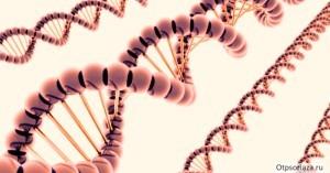 генетическая теория